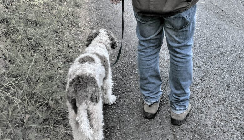 truffle hunting in florence