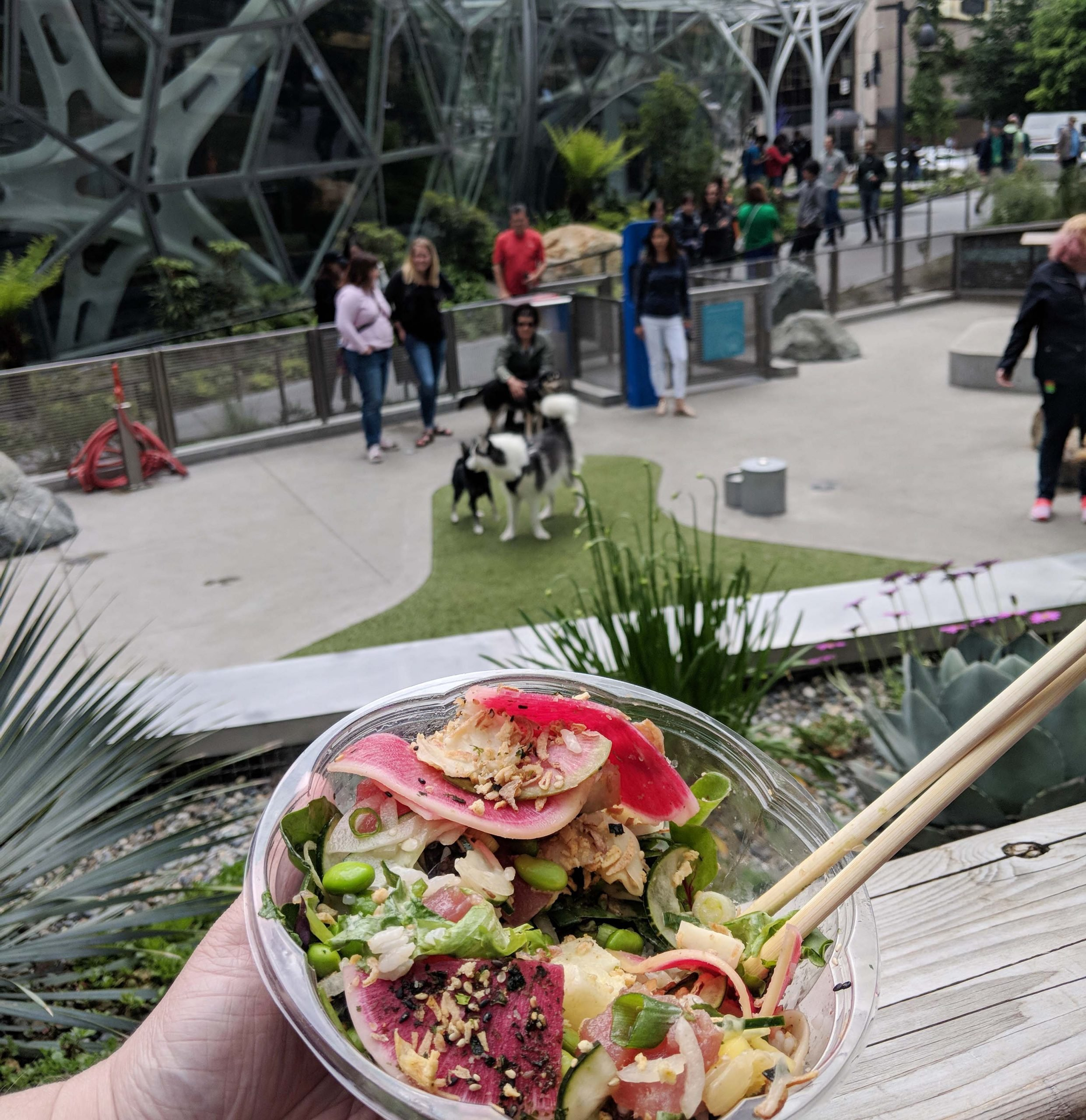 A poke salad held with the amazon sphere dog park in the background
