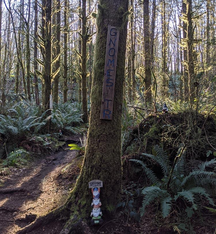 hh gnome trail seattle 012
