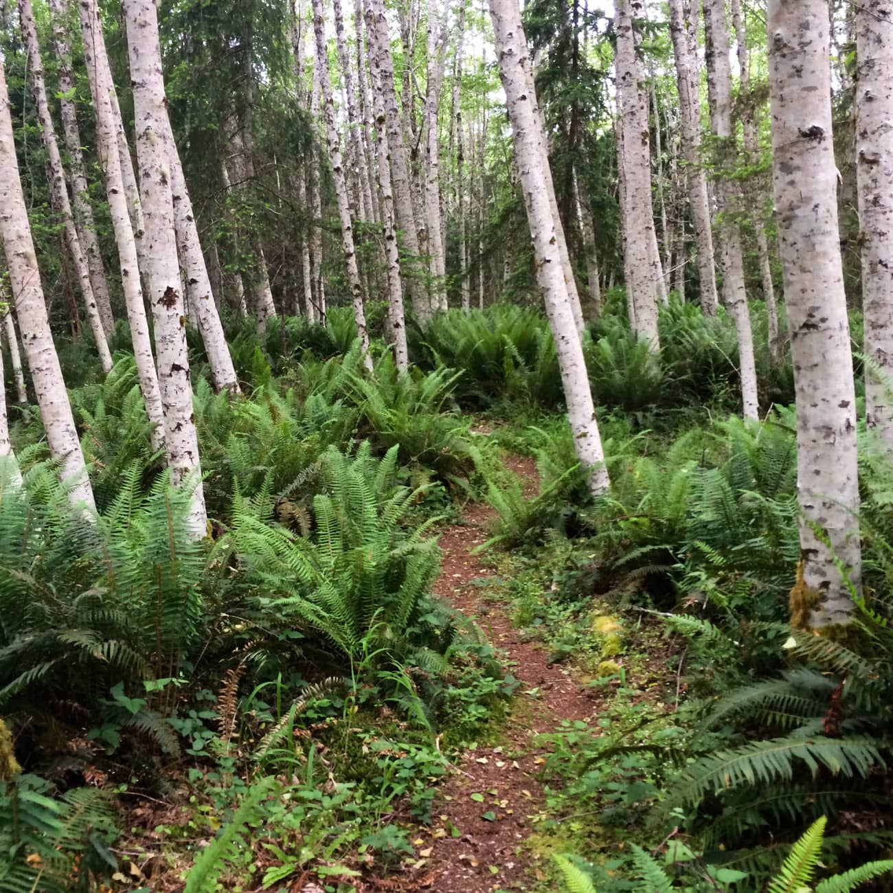 hiking trails near the hood canal stay snow free all winter, thanks to the low elevation