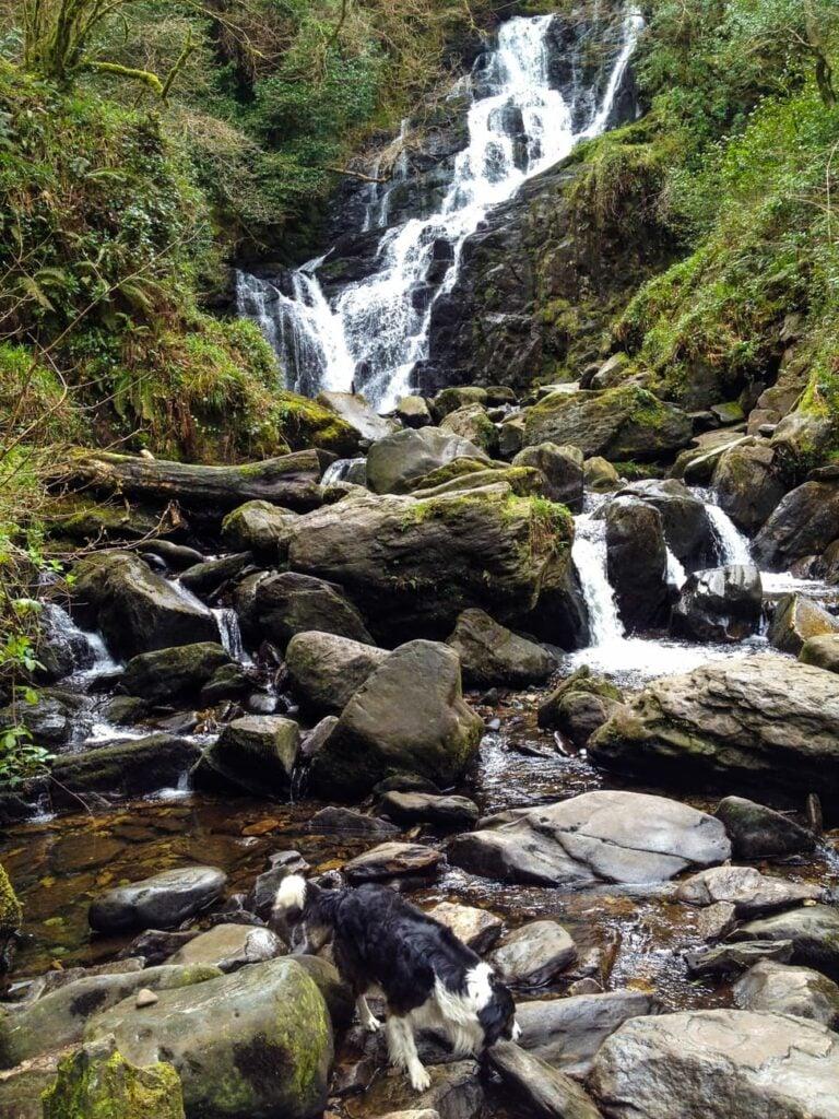 The vibrant green of torc waterfall in killarney, ireland