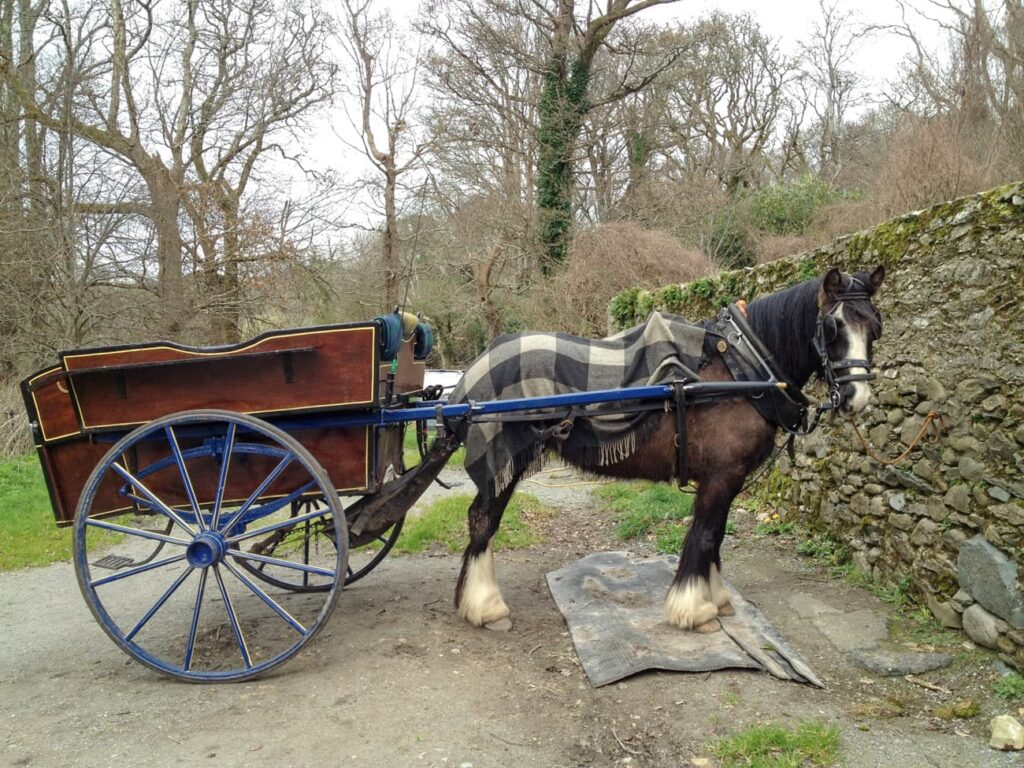 An irish draft horse and traditional cart waiting to carry guests from the road up the lane to muckross castle - a bit touristy but so, so much fun.
