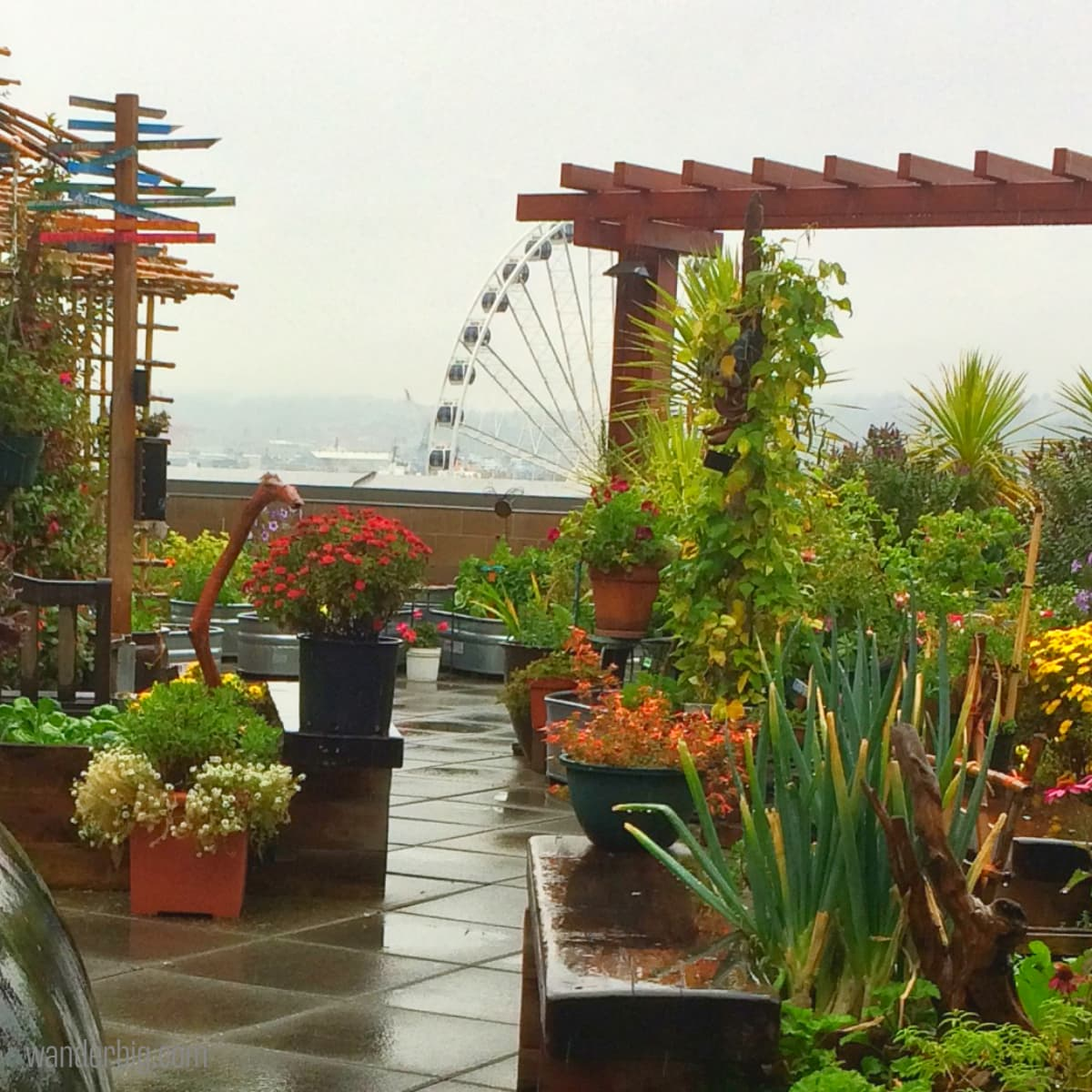 Pike place market's secret rooftop garden: how to find this secluded urban oasis during your visit.