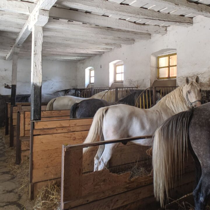visiting the romanian national stud farm