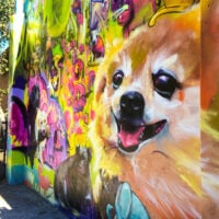 Dog park mural in Seattle.