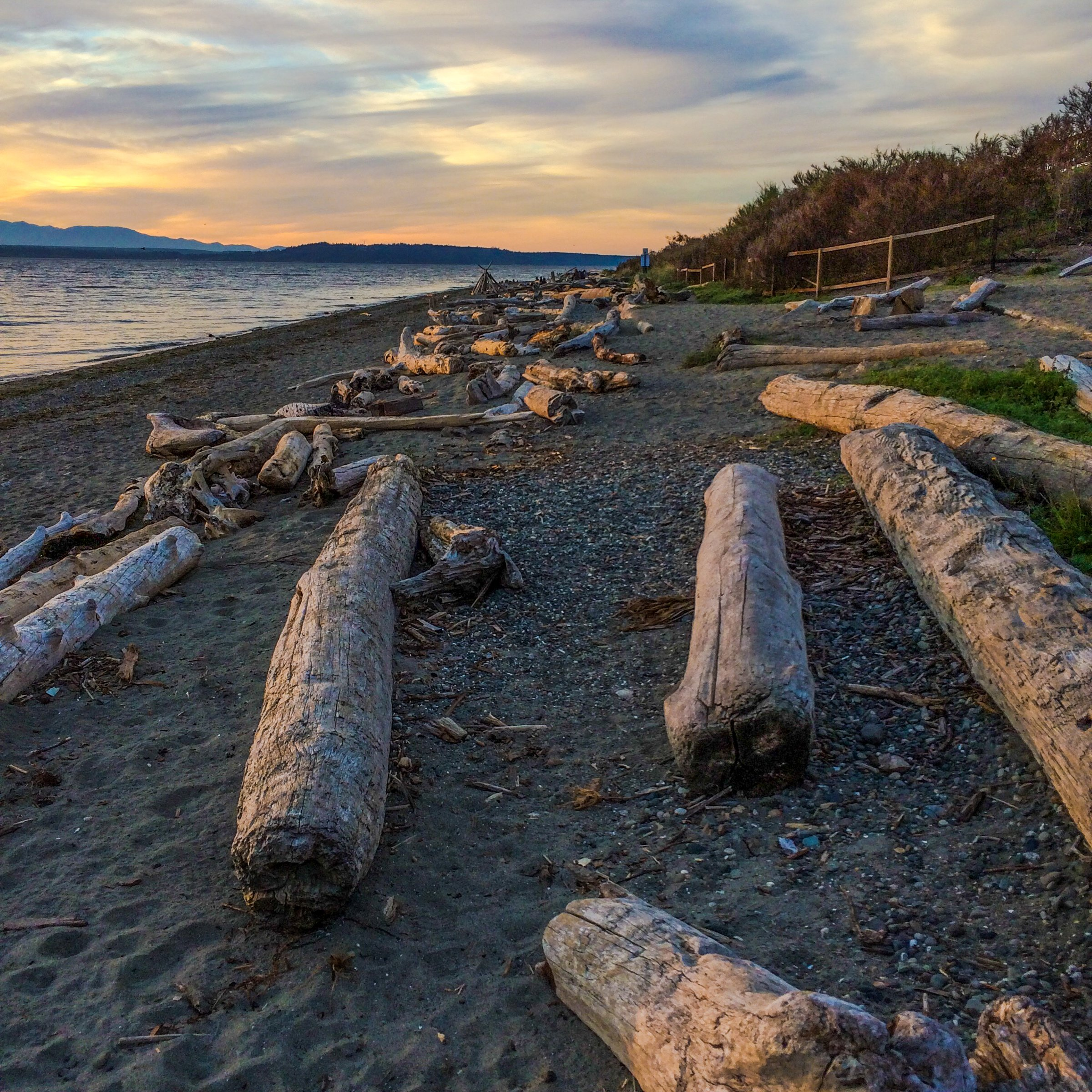 Driftwood logs on the beach in the pacific northwest.