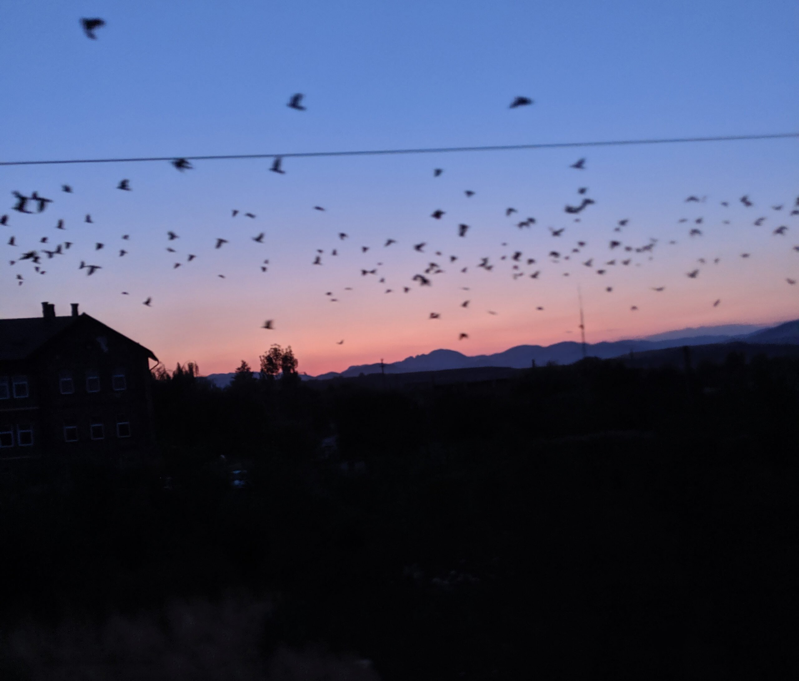 A sunset sky in romania filled with black winged creatures.