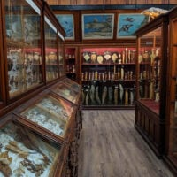 Wood and glass shelves in a museum in Transylvania