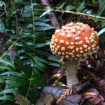 A tiny mushroom growing on the forest floor in the fall near seattle.