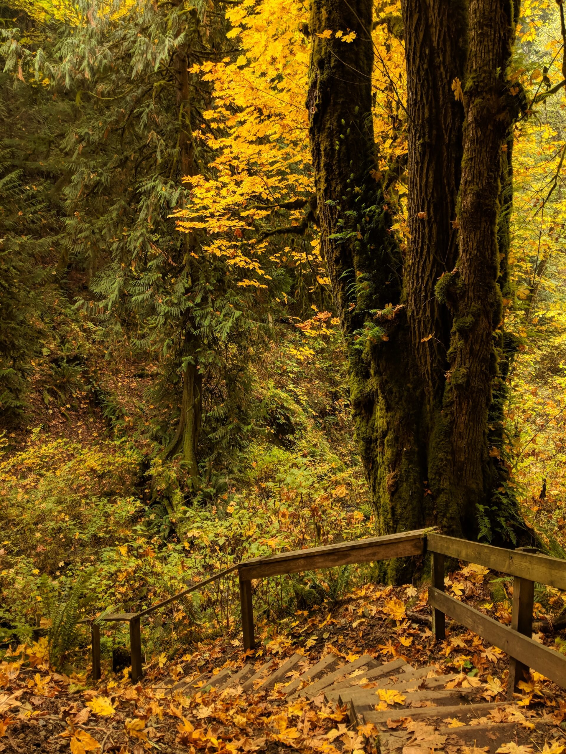 Autumn light on a forest staircase in a state park in washington.