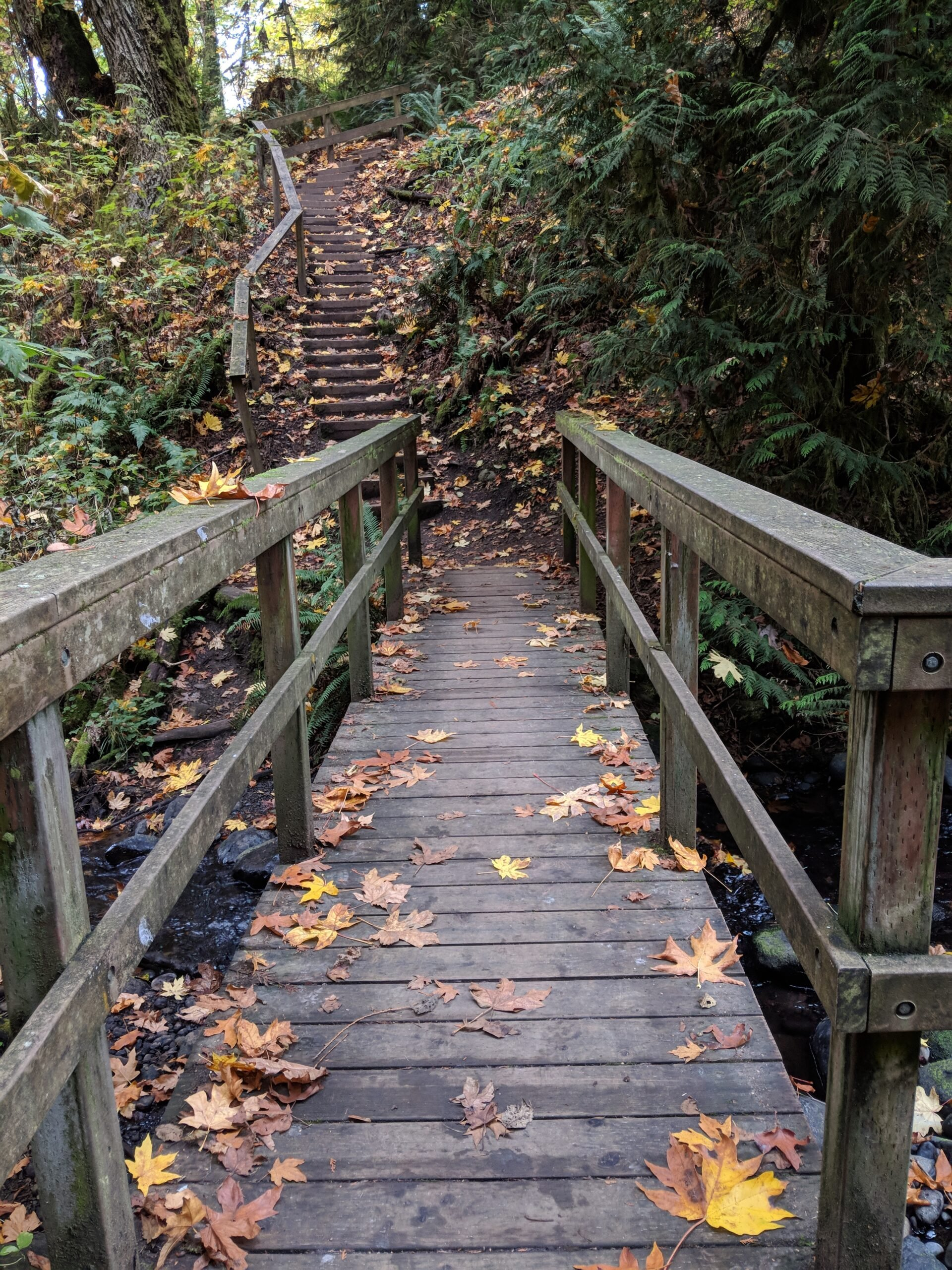 A wooden bridge over creek in flaming geyser state park.