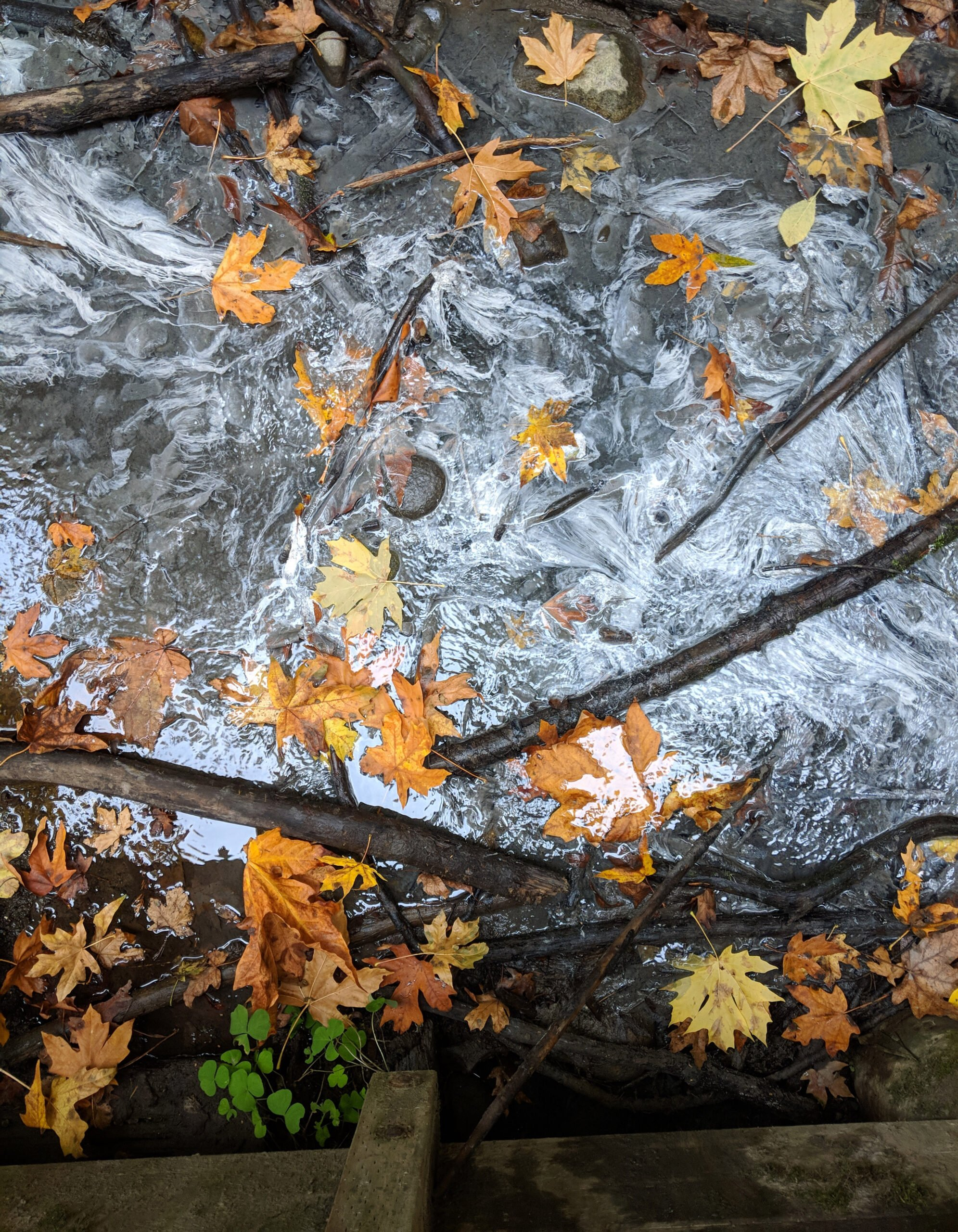 Water rushing under a bridge at the state park in washington with autumn leaves in the rapids.