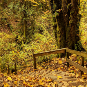Flaming geyser state park in washington: things to do