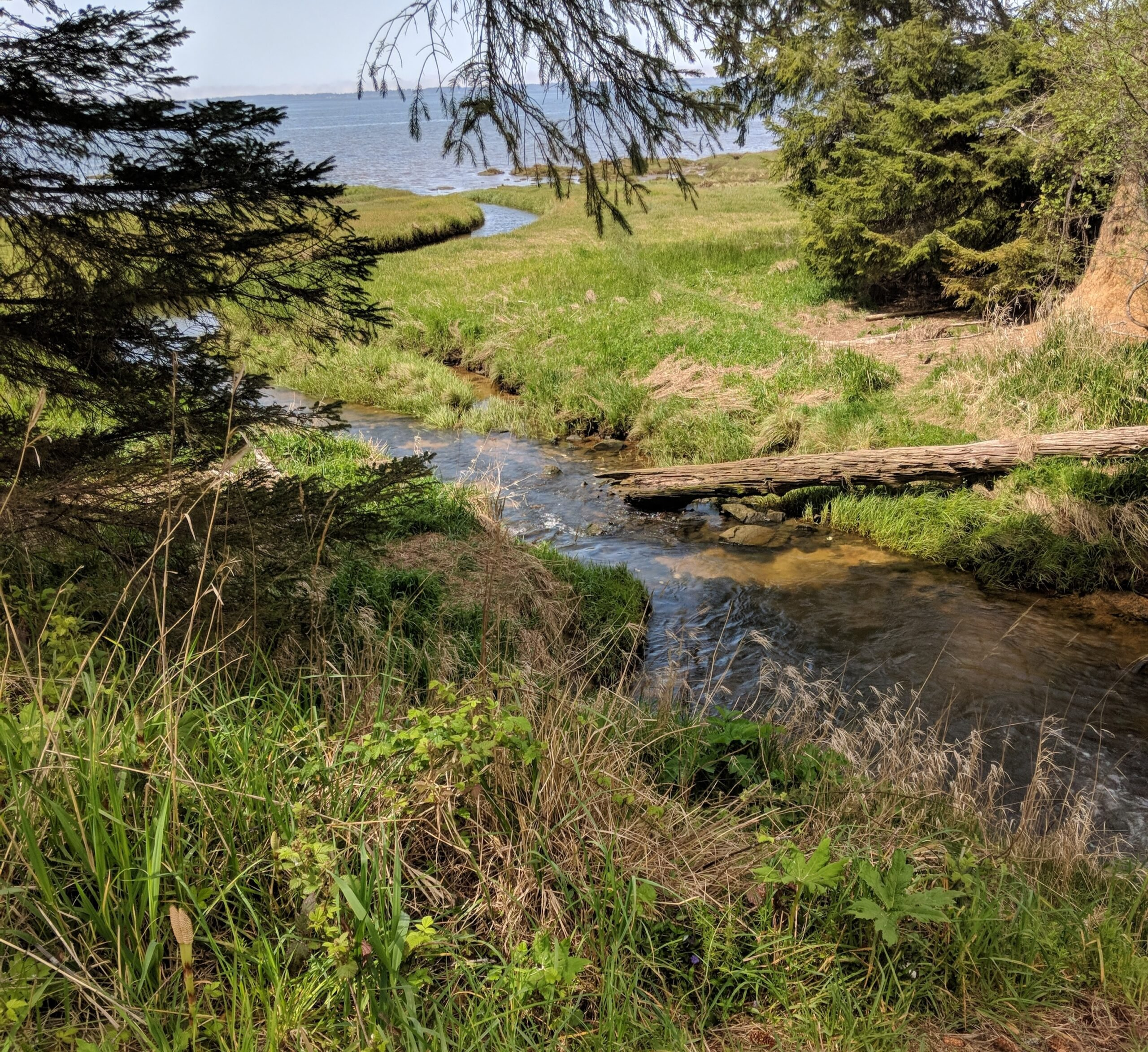 A small creek leading to the pacific ocean