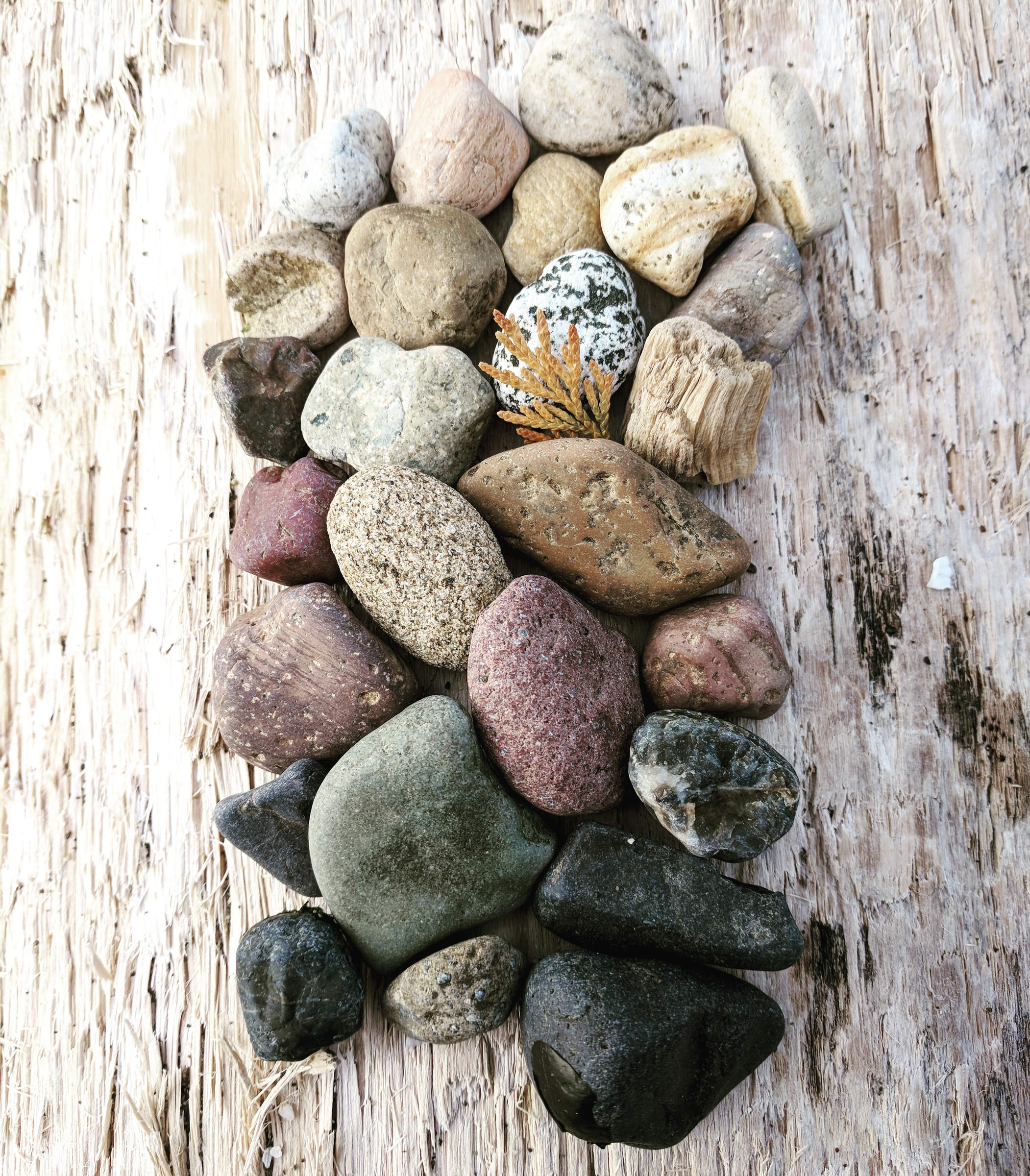 Colorful tumbled rocks artfully arranged on a piece of driftwood on the beach in winter.