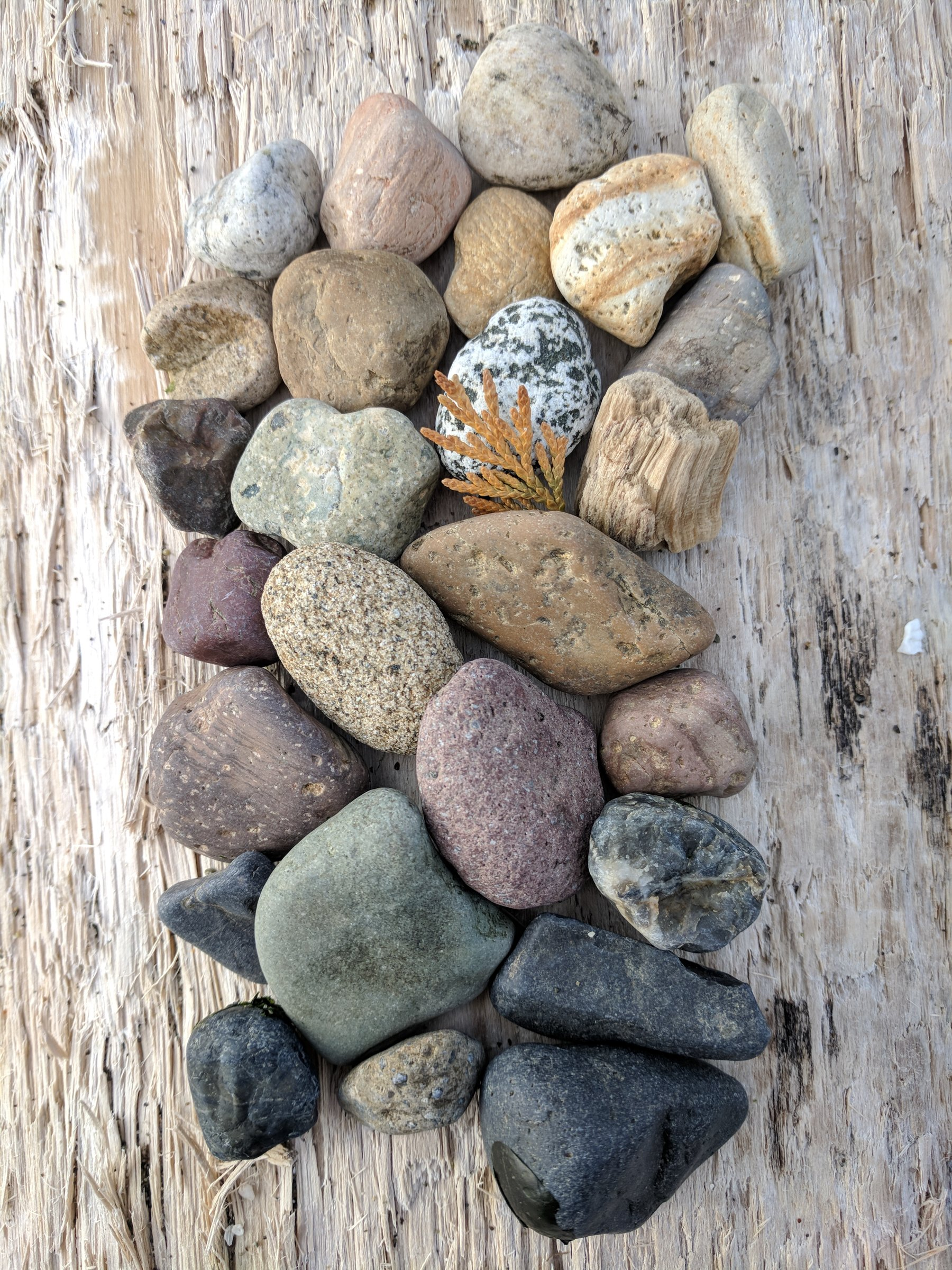 Colorful rocks arranged in a mosaic on a piece of driftwood, an example of one of my favorite things to do on the beach in the winter.