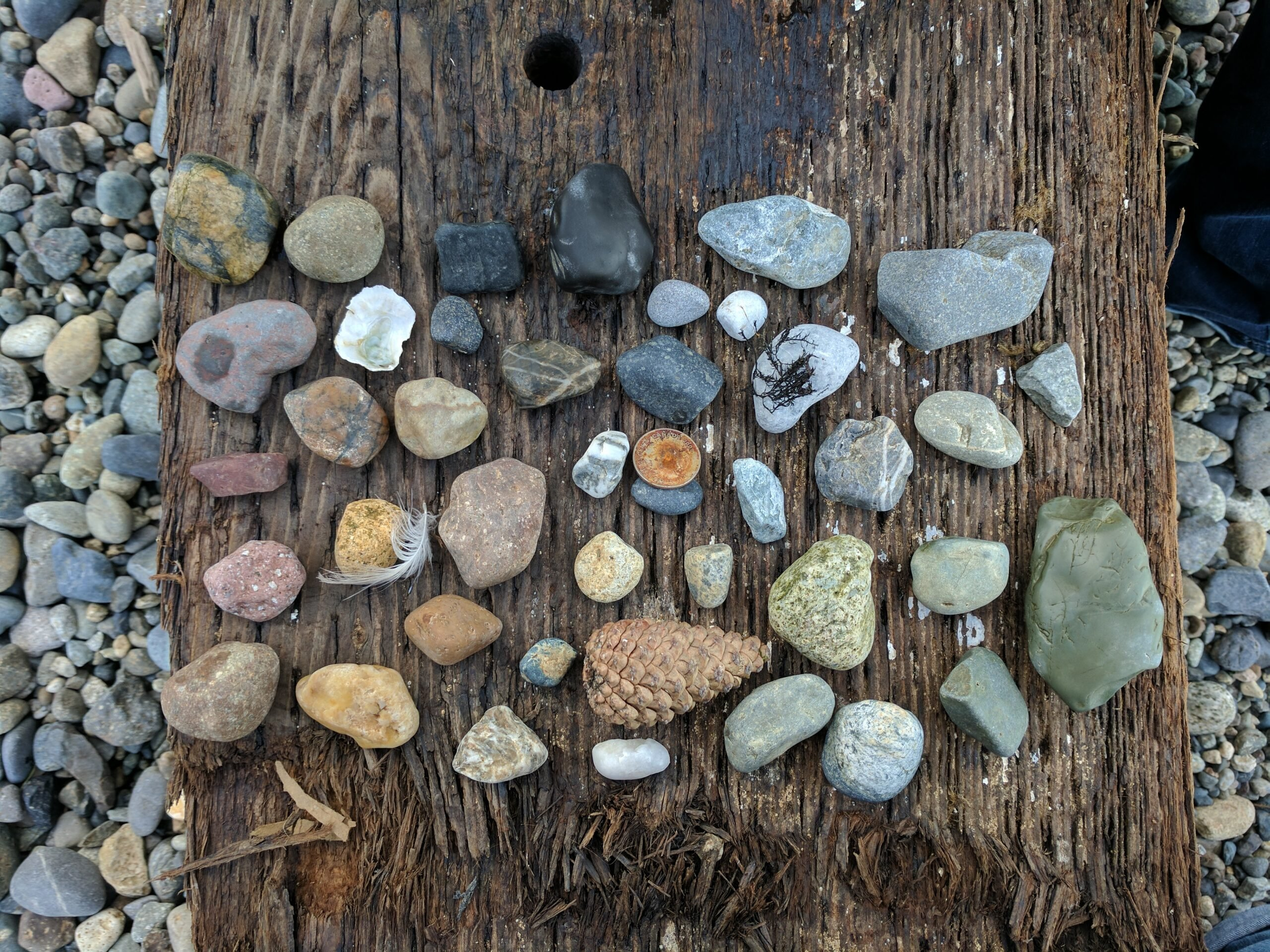 An assortment of rocks found on the pocket beaches of downtown seattle.