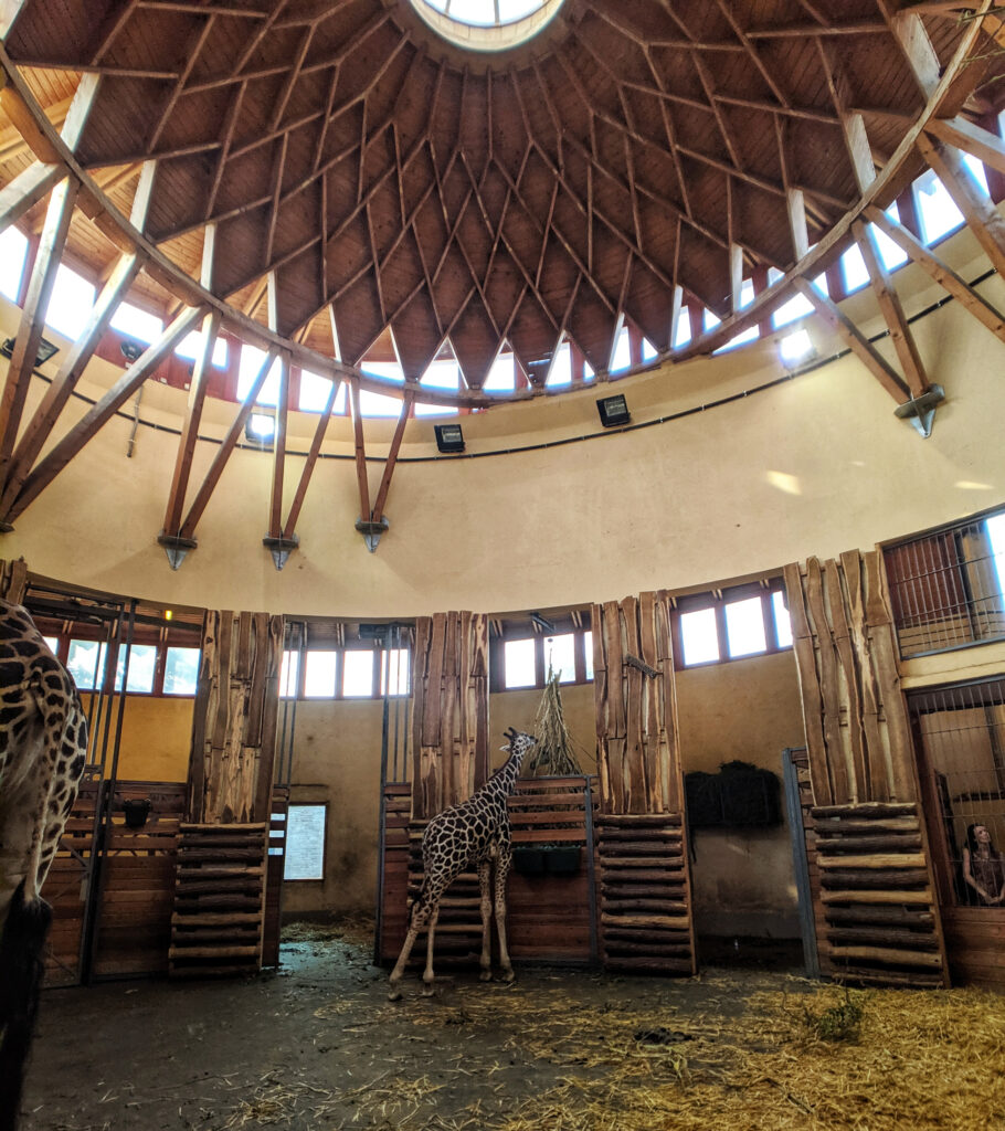 Giraffe house at budapest zoo.