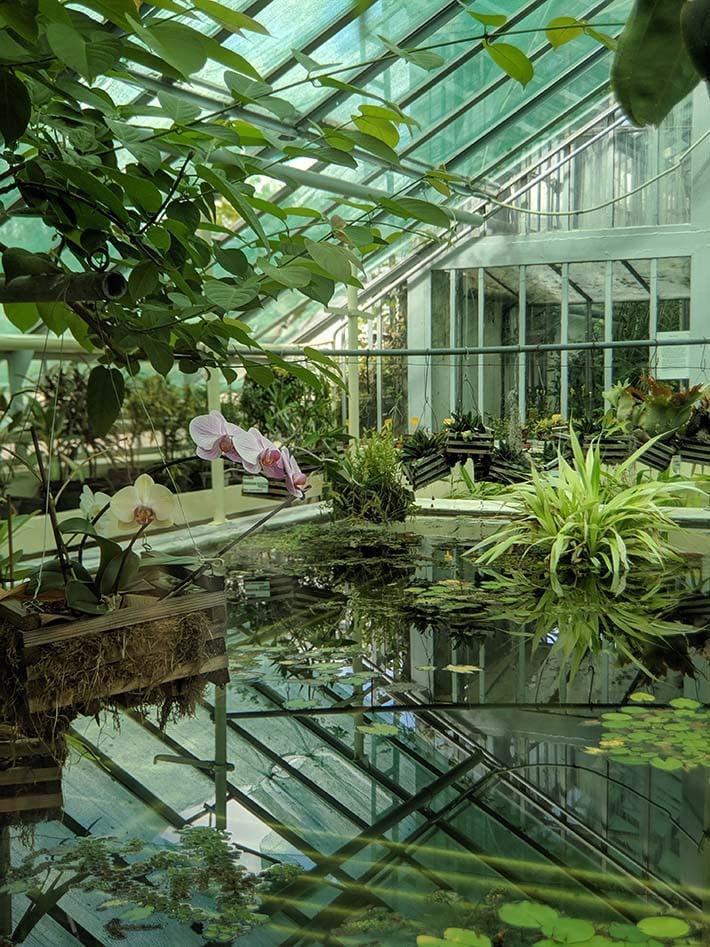 A garden in a botanical garden in romania