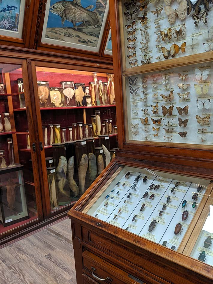 Natural history museum in cluj napoca translyvania